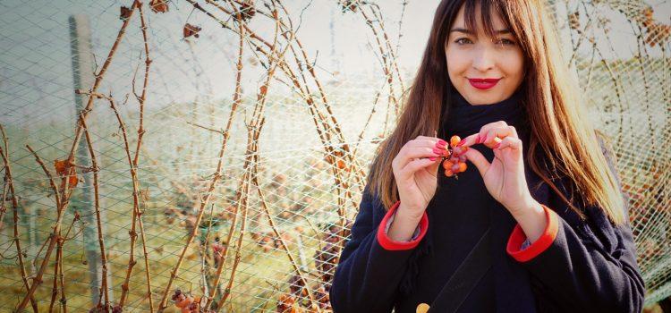 Spiritul locului, farmecul vinului: acasă la Jidvei, cel mai mare producător de vin din România
