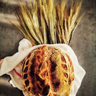 Mirosul inconfundabil pe care îl degajă. Culoarea îmbietoare, forma care atrage privirea. Sunetul crocant pe care îl scoate atunci când e tăiată. Momentul în care o atingi, când îi simți coaja și miezul pufos. Și gustul. Gustul care te transportă instant peste timp și spațiu. Pâinea este prin excelență o experiență senzorială. Iar când, pe lângă toate cele 5 simțuri pe care le trezește, mai intervine și un al 6lea - dragostea cu care e pregătită și cu care e spusă povestea ei - abia atunci experiența este completă. #bakedwithlove 🌾 #bmexperiences 🌾 #sourdoughbread #sourdoughlove #naturallyleavened #artisanbread #breadislove #breadart #braided #igbreadclub #instabread #realbread #painaulevain #wheat #crust #breadstagram #petitejoys #foodphoto #mobilephoto #foodstyling