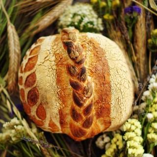 🌾 ☀️ 🌾  #wheat #bread #sourdoughbread #artisanbread #breadislove #igbreadclub #realbread #breadart #flourwatersalt #painaulevain #painecumaia #crust #breadstagram #breadbosses #sourdoughlove #handmadebread #braidedbread #bakedwithlove #bmjoiedevivre #bmexperiences #foodphotography