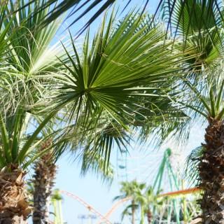 View from Ayia Napa, the epicenter of cypriot fun 🌴 ☀️ #visitcyprus #cyprusview #cyprustourism #lovecyprus #islandlife #islandvibes #travelphotography #mediterranean #palmtrees #seetheworld #traveltheworld