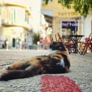 One way to look at Monday 👀 #mondaymood #mondaymotivation #catlife #cypruscats #lazy #nicosia #cyprusisland #thehappynow #perfectshot #VivoSmartphone #ledrastreet