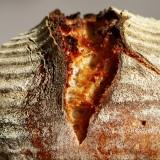 Pâine cu maia pe Marte? Știința spune că e posibil!